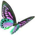 Butterfly 125 wide