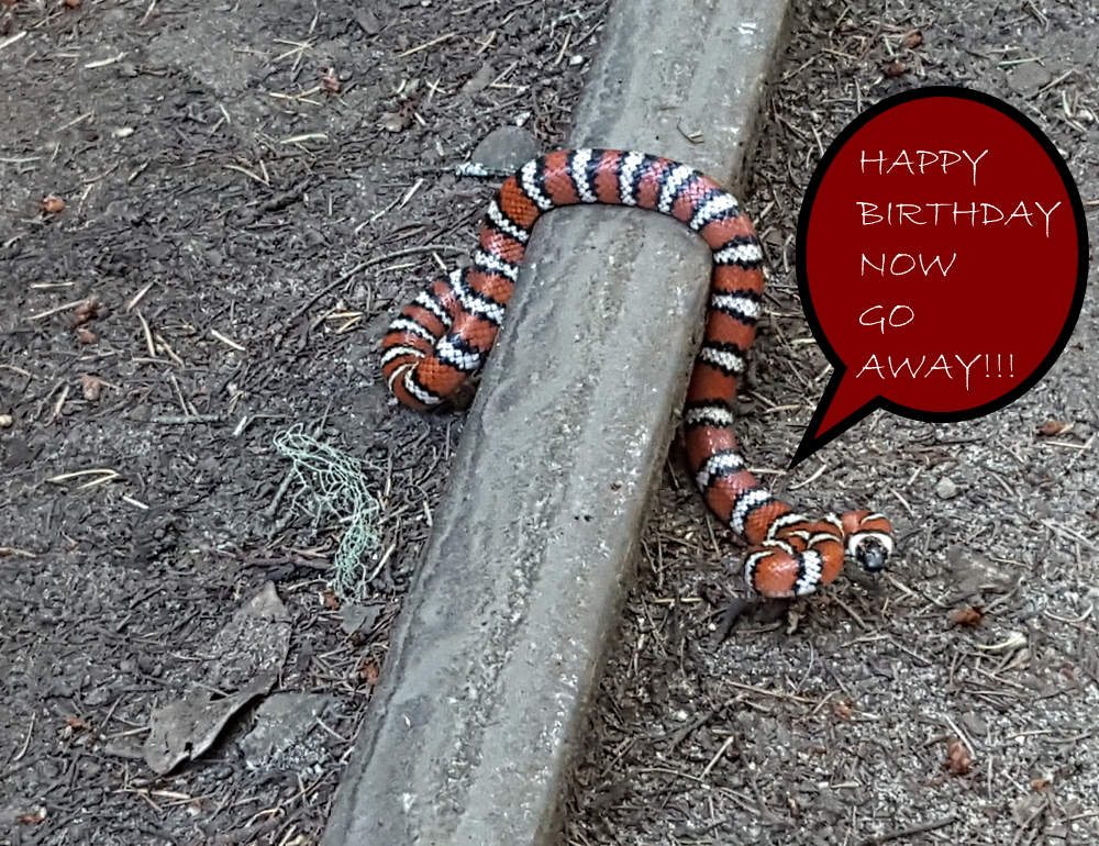California mountain kingsnake June 2020 talking