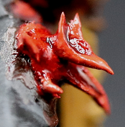 Poxwalker #20 Khorne Flower close up from right